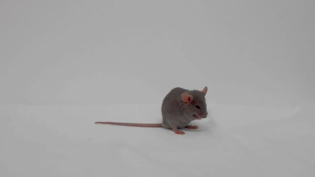 Tierschutz am Lehrstuhl Ernährungstoxikologie